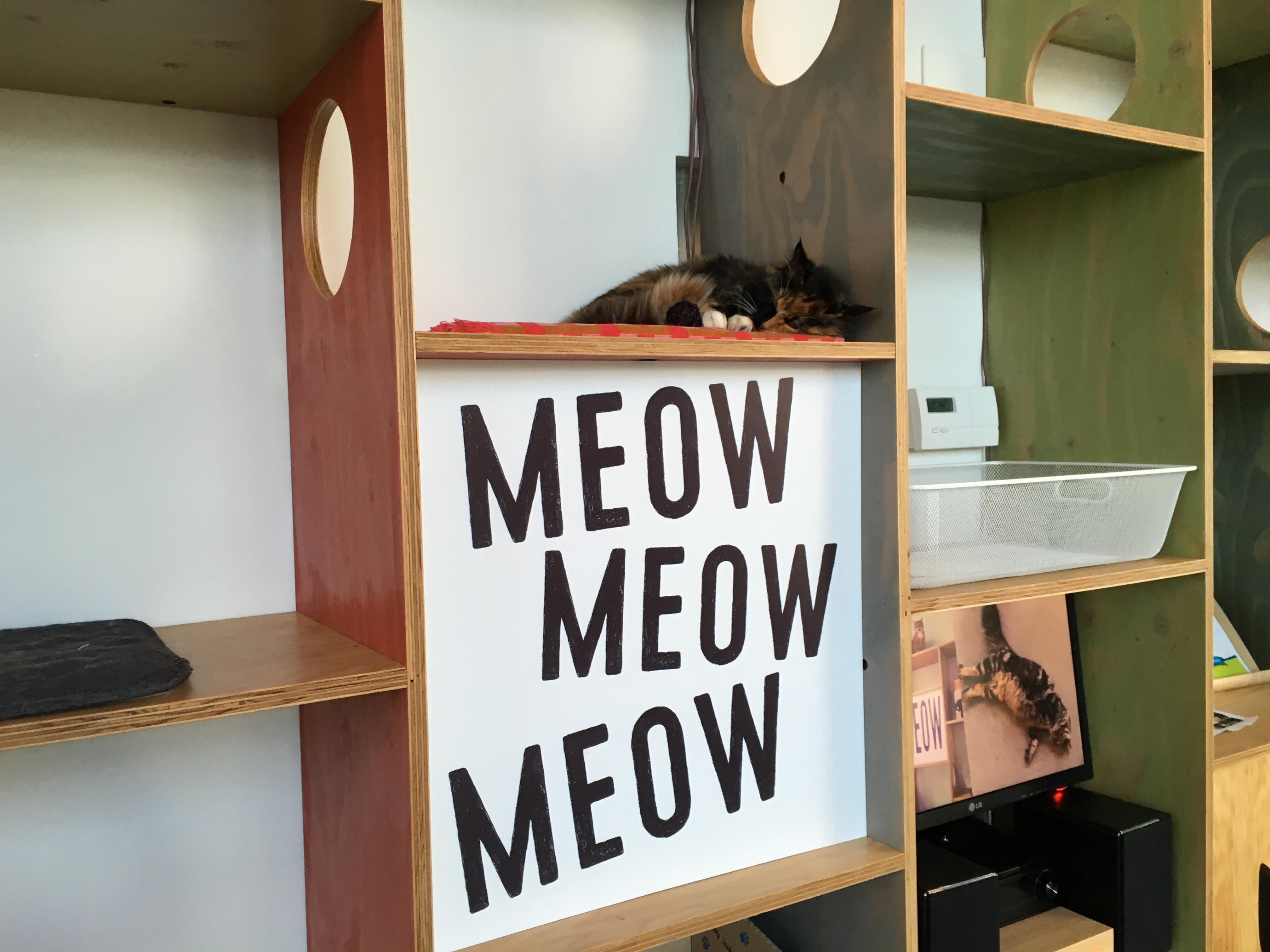 MeowMeowMeow